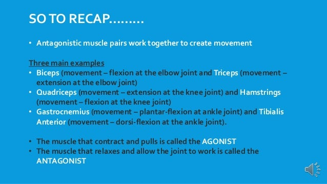 Gcse Pe Revision Antagonistic Muscle Pairs