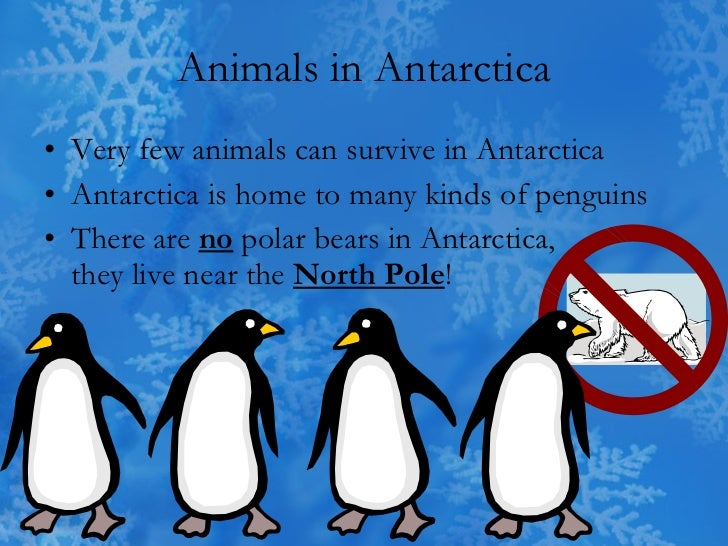 Antarctica for Can you visit antarctica