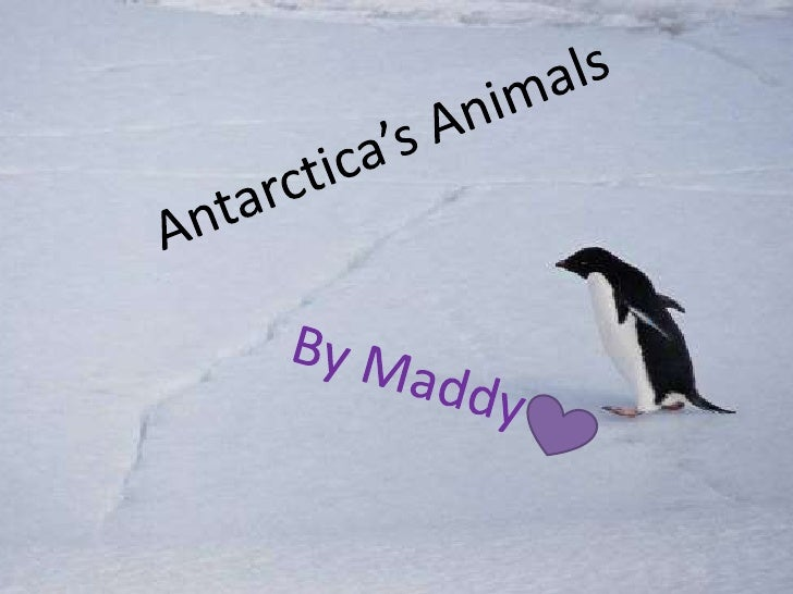 Antarctica's Animals<br />By Maddy<br />