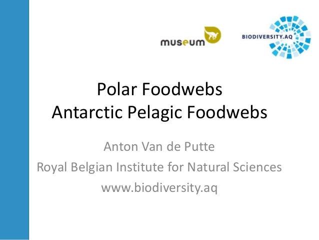 Polar FoodwebsAntarctic Pelagic FoodwebsAnton Van de PutteRoyal Belgian Institute for Natural Scienceswww.biodiversity.aq