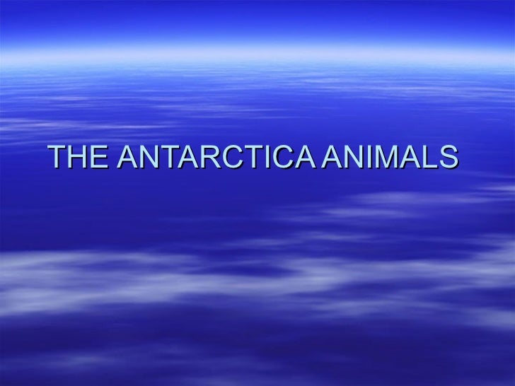 THE ANTARCTICA ANIMALS