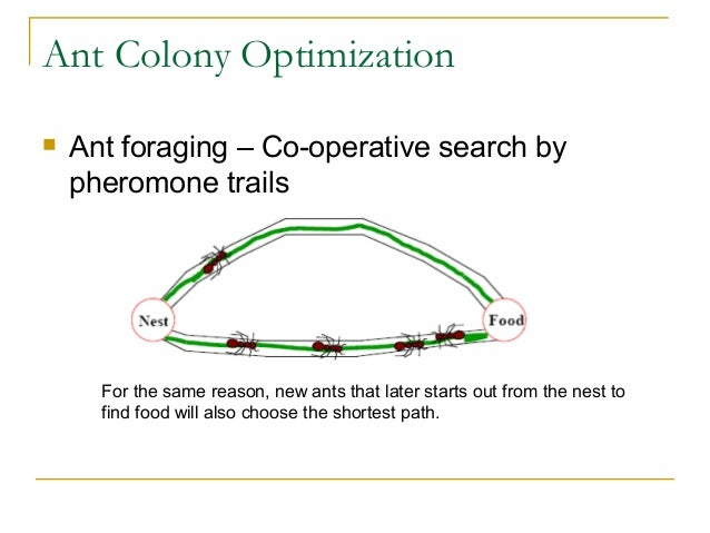 ant colony optimization Abstract ant colony optimization (aco) is a promising new approach to  combinatorial optimization here aco is applied to the traveling salesman  problem.