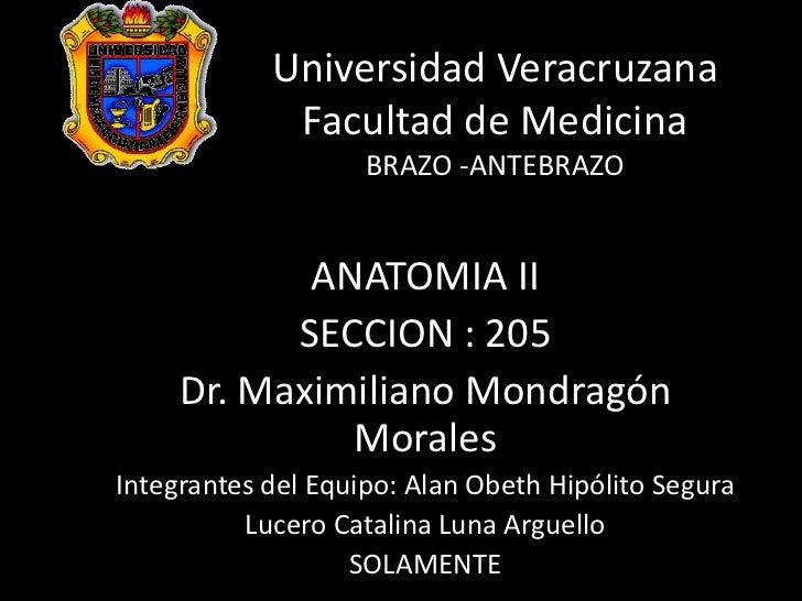 Universidad Veracruzana             Facultad de Medicina                    BRAZO -ANTEBRAZO            ANATOMIA II       ...