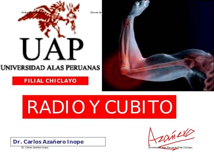 Anatomía y Fisiología I    Escuea de Enfermería - Ciclo II         FILIAL CHICLAYO           RADIO Y CUBITO Dr. Carlos Aza...