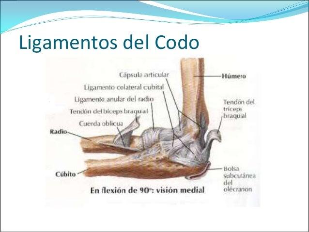 Antebrazo,codo y mano expo ortopedia 4427 ok