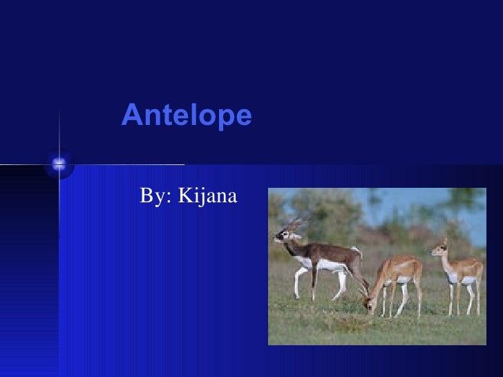 Antelope By: Kijana