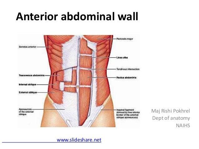 Anterior abdominal wall 1 638gcb1434948720 anterior abdominal wall maj rishi pokhrel dept of anatomy naihs slideshare ccuart Image collections