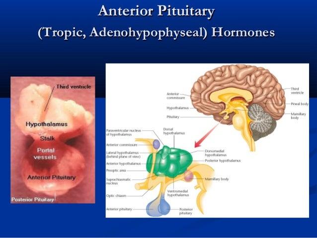 Anterior PituitaryAnterior Pituitary (Tropic, Adenohypophyseal) Hormones(Tropic, Adenohypophyseal) Hormones
