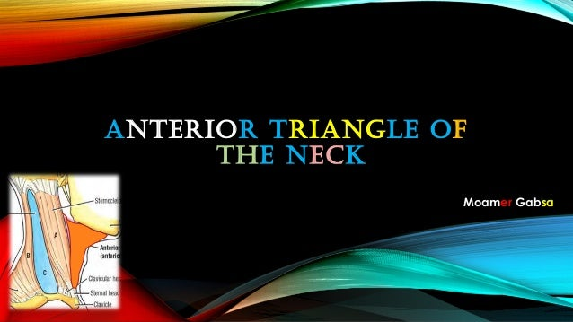 Moamer Gabsa ANTERIOR TRIANGLE OF THE NECK