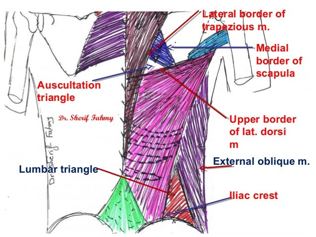 Lumbar Triangle Of Pe