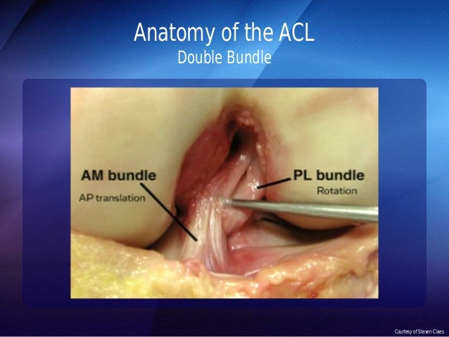 Anterolateral Ligament (ALL)