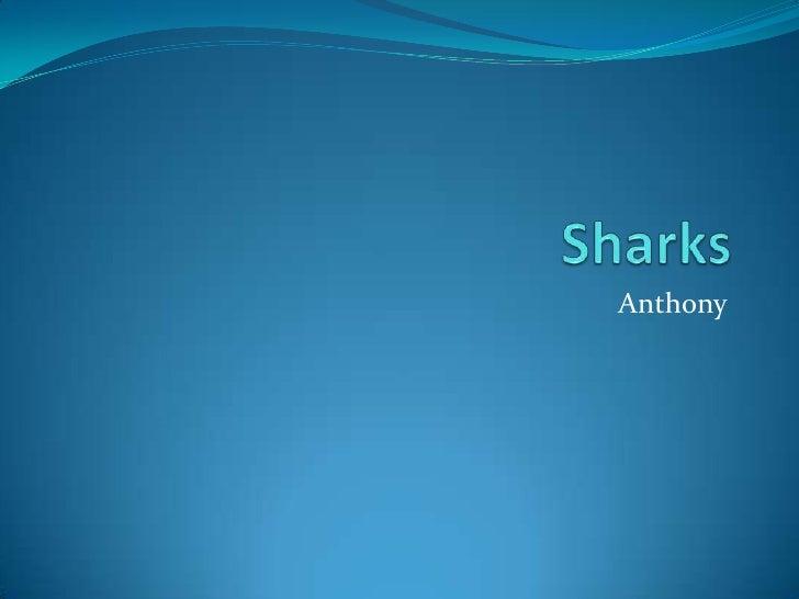 Sharks<br />Anthony<br />