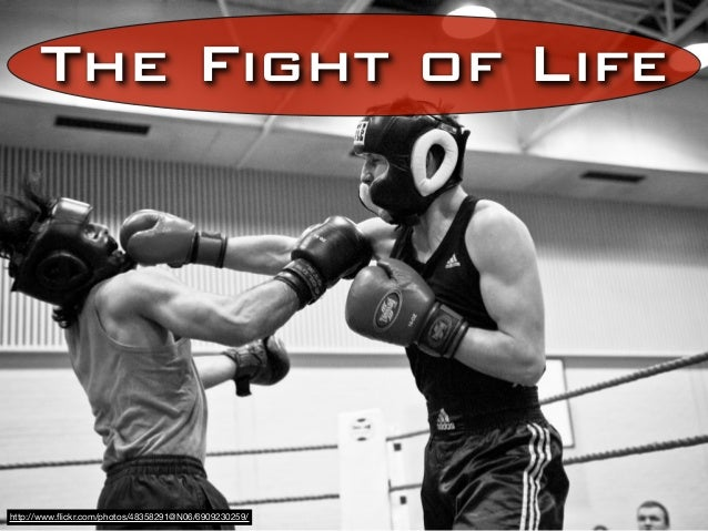 The Fight of Lifehttp://www.flickr.com/photos/48358291@N06/6909230259/