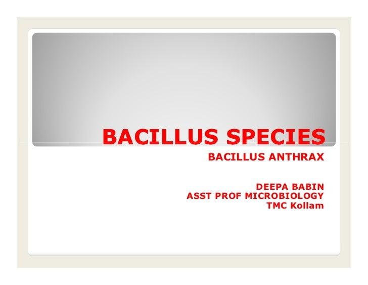 BACILLUS SPECIES         BACILLUS ANTHRAX                  DEEPA BABIN      ASST PROF MICROBIOLOGY                    TMC ...