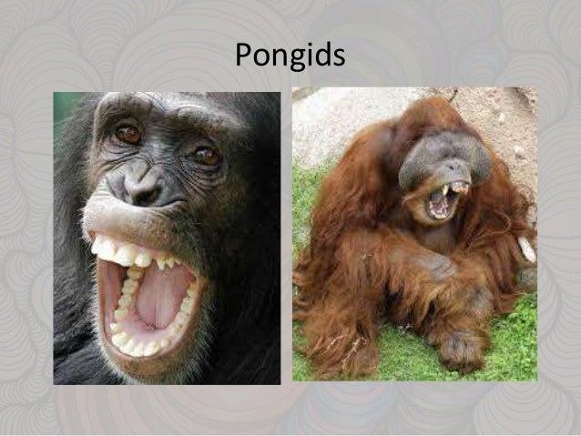 primates characteristics