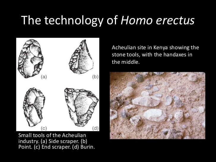 Homo erectus 1995 by joe damato 10