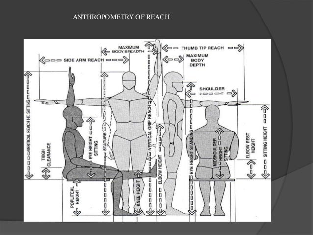 List Of Synonyms And Antonyms Of The Word Anthropometry