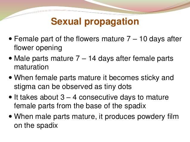 mature propagation photos orgie cum