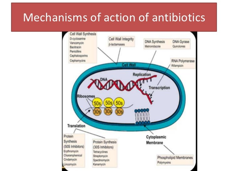antibiotic resistance mechanisms and solutions At the same time, evolution of antibiotic resistance is probably the  and the  mechanisms by which antibiotic resistance evolves and spreads in bacterial  populations  generating effective solutions to this crisis requires active.