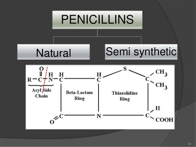 CELL WALL SYNTHESIS IN BACTERIA. The first stage, precursor formation, takes place in the cytoplasm. The product, uridine...