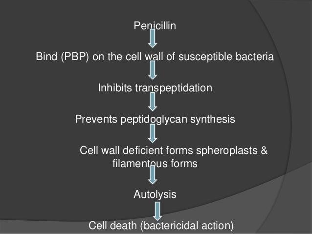 CLASSIFICATION- PENICILLIN- Natural Penicillins • Penicillin G Semi synthetic Penicillins • Acid-resistant alternative to ...