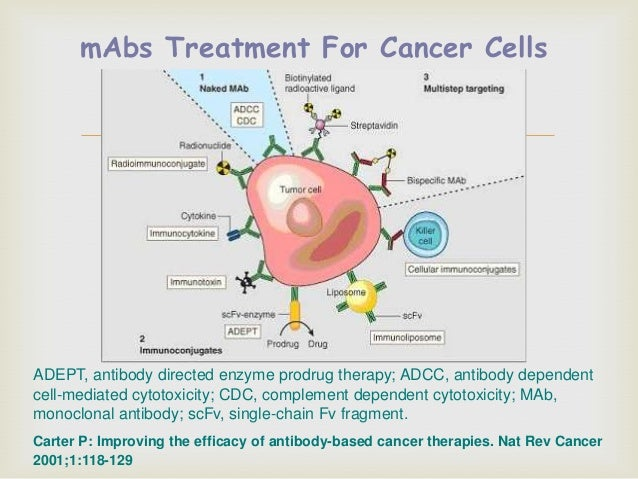 doxorubicin for drug delivery in cancer treatment Synergistic cisplatin/doxorubicin combination chemotherapy for doxorubicin combination chemotherapy for multidrug treatment of cancer using drug delivery.