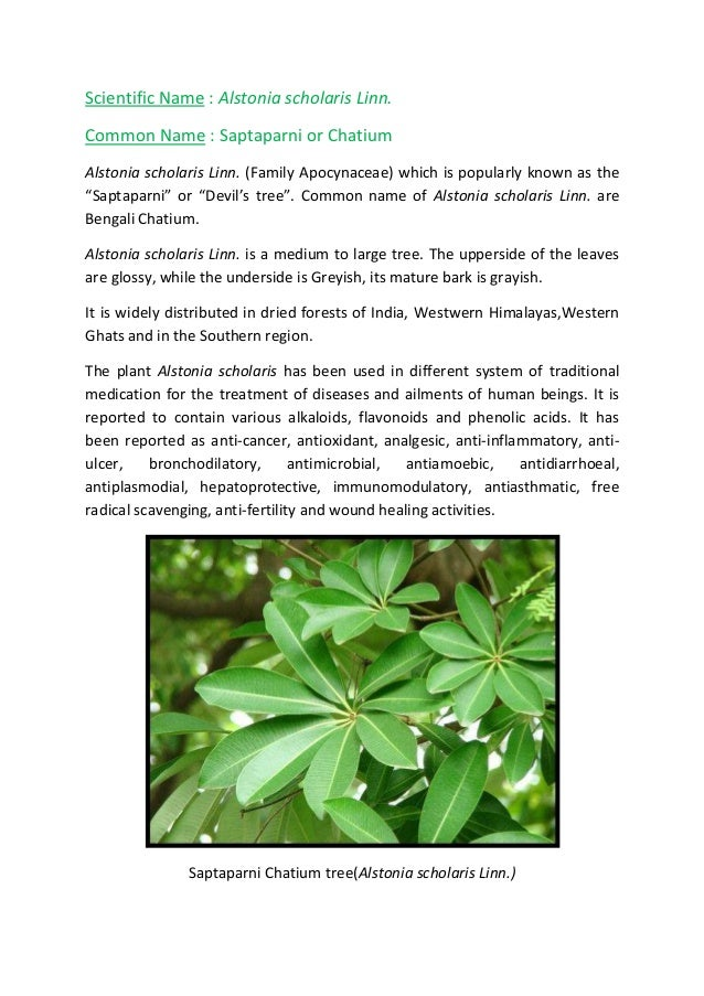 antimicrobial activity of plant extracts thesis