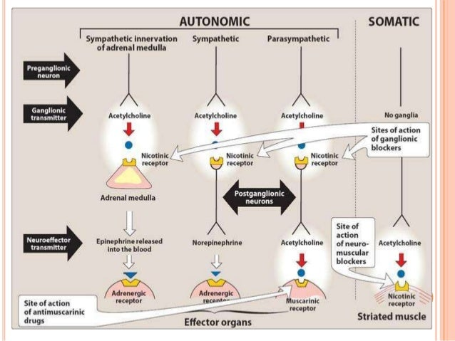 PHARMACOKINETIC  Tertiary group:  lipid soluble  distribution is wide  absorption from gut and across conjunctiva is g...