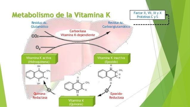 formula para calcular el metabolismo basal Natural