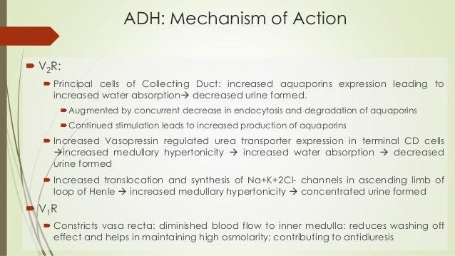 Antidiuretics