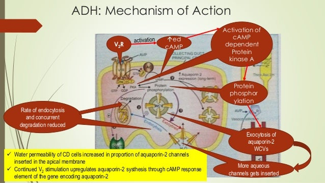 activation systhesis