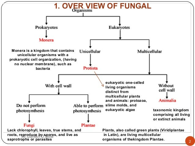 antifungal agents The global antifungal agents market is anticipated to grow at a cagr of 372% between 2018 and 2026 the antifungal agents are fungistatic in nature and are used to prevent and treat mycoses such as candidiasis, ringworm, etc.