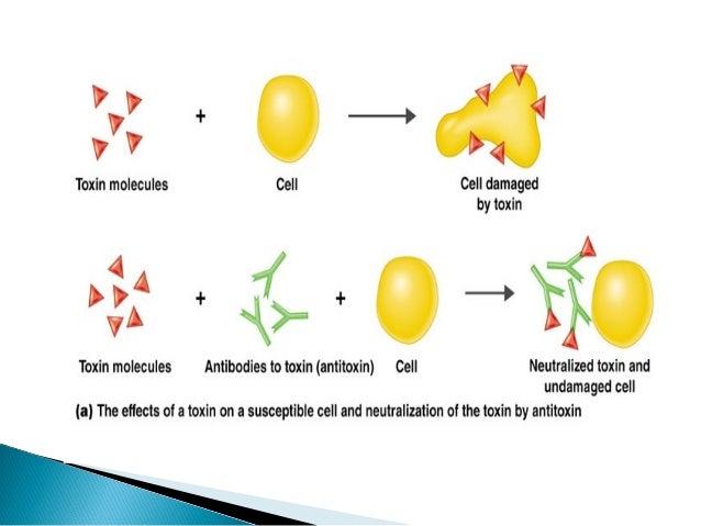 enzyme assays by abhilasha singh Research article a fluorescent based enzyme assay for recombinant human lipoxygenase enzyme isoforms: rakesh kumar singh , suman gupta , prabhakar tiwari , shalini saini , renu malik , rajiv kant , sunanda g dastidar and abhijit ray.