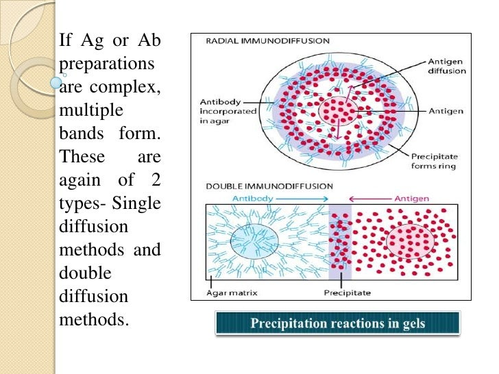 Agglutination Reaction:• When a particular Ag is mixed with its Ab's in thepresence of electrolytes at a suitable temperat...