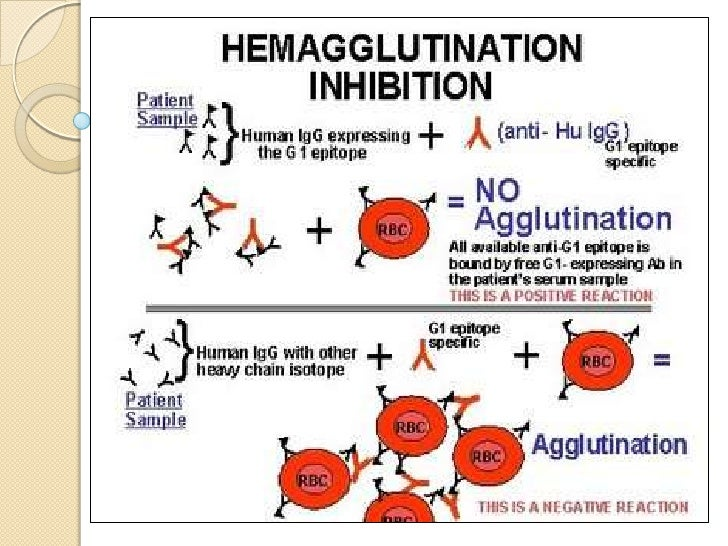 Passive agglutination test:       It is similar tohaemagglutination test but the physical nature of thereaction is altere...