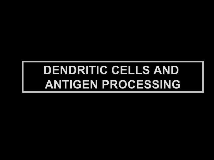 DENDRITIC CELLS AND  ANTIGEN PROCESSING