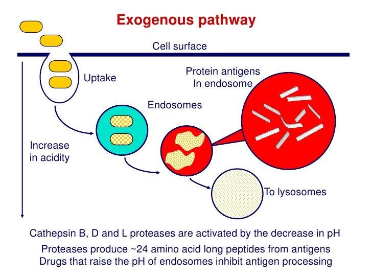 Antigen Proc... Reverse Complement