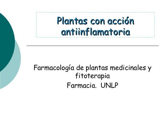 Plantas con acciónPlantas con acciónantiinflamatoriaantiinflamatoriaFarmacología de plantas medicinales yfitoterapiaFarmac...