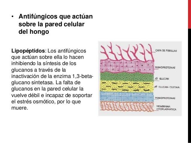 Antimicoticos - Tipos de hongos en la pared ...