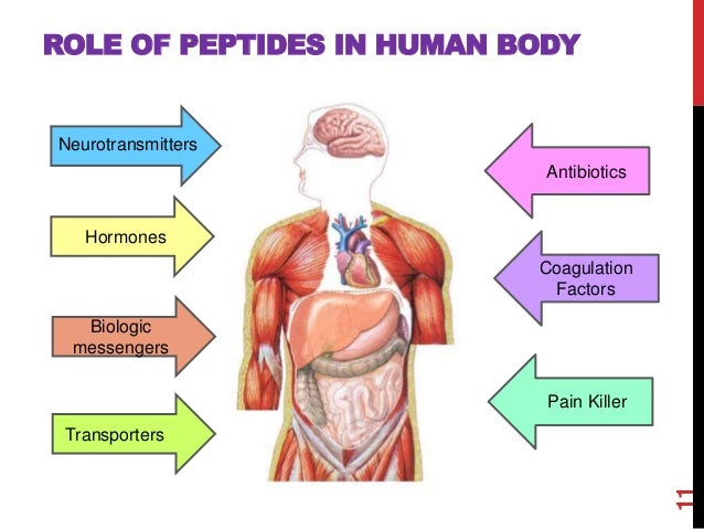 cationic antimicrobial peptides in humans Homo sapiens (human)  antimicrobial humoral immune response mediated by  antimicrobial peptide  18 kda cationic antimicrobial protein1 publication.