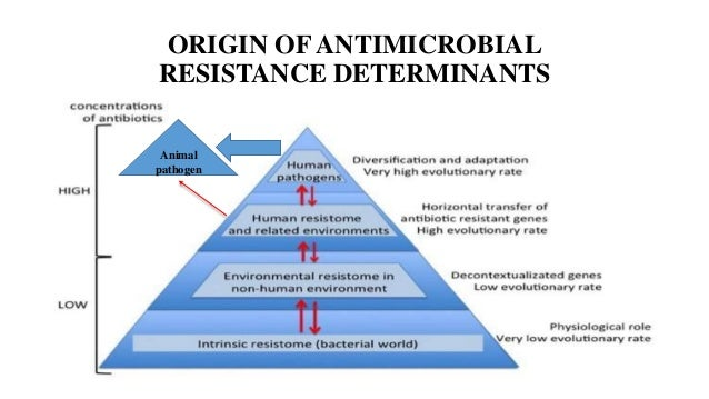 the issue of antibiotic resistance Antibiotic use, appropriate or not, contributes to the development of antibiotic resistance this is true for acne medications that contain antibiotics short- and long-term use of antibiotics for treatment or prevention of bacterial infections should be under the direction of a healthcare professional to ensure appropriate use and detection of .