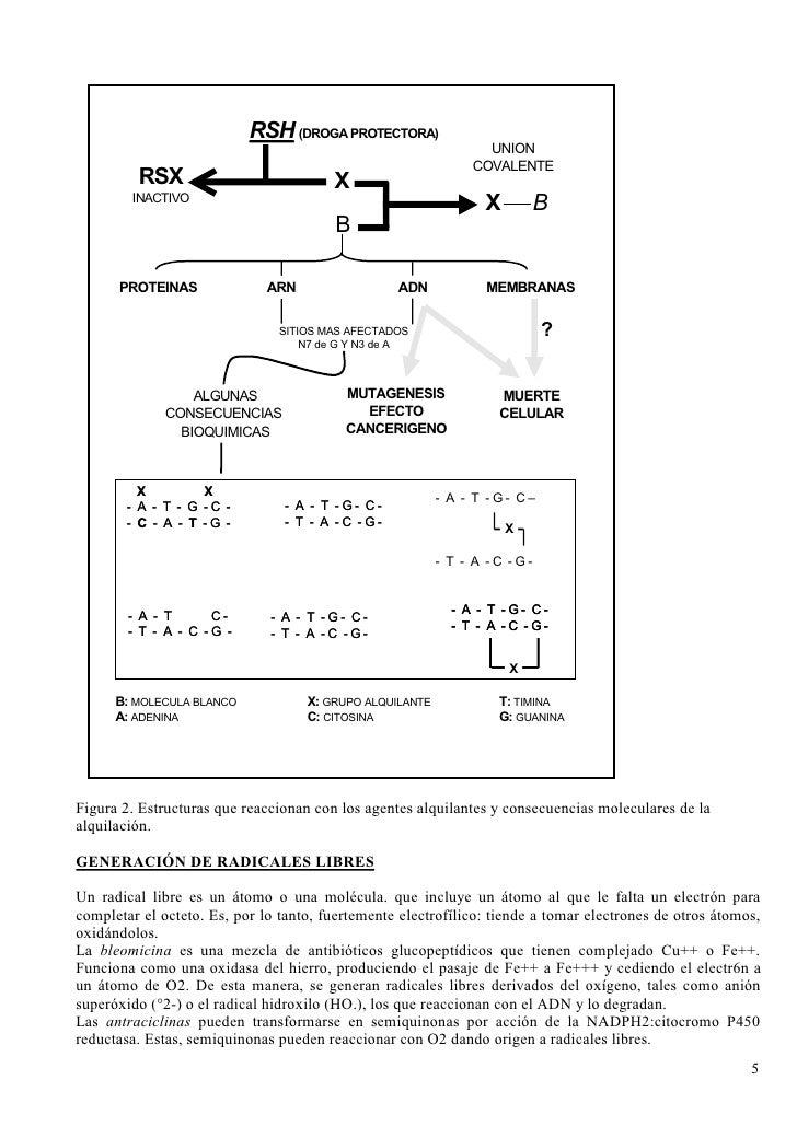 ESQUEMA 6                         ALQUILACION Y SUS CONSECUENCIAS                              RSH (DROGA PROTECTORA)     ...