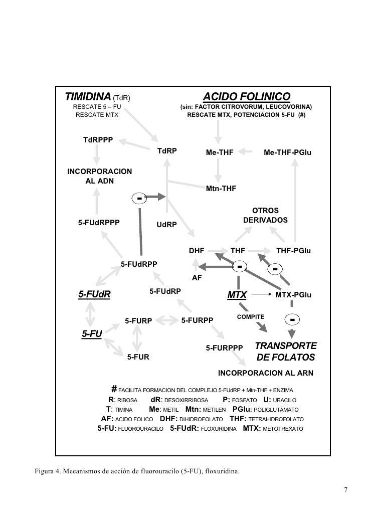 ESQUEMA 11                MECANISMO DE ACCION DE METOTRAXATO Y FLUORORACILO           TIMIDINA (TdR)                      ...