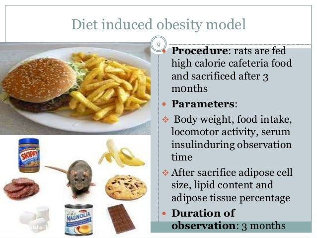 Model Diets