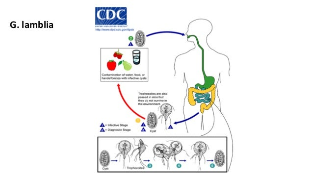 Antiprotozoal Drugs
