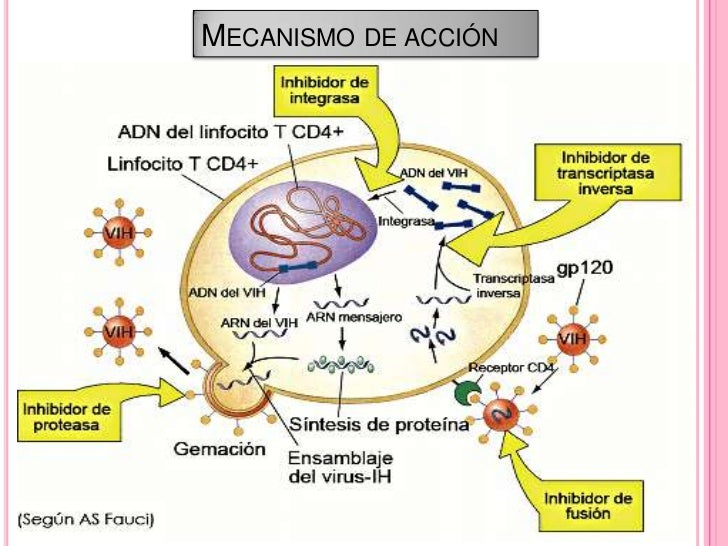 esteroides orales que debemos evitar