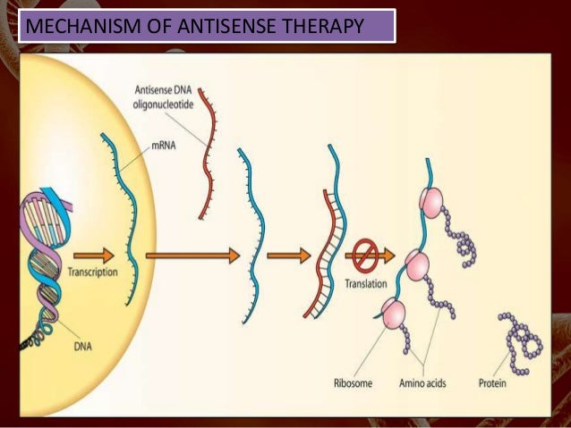 antisense therapy Antisense definition is - having a sequence complementary to a segment of genetic material specifically : of, being, relating to, or possessing a sequence of dna or rna that is complementary to and pairs with a specific messenger rna blocking it from being translated into protein and serving to inhibit gene function  antisense drug therapy.