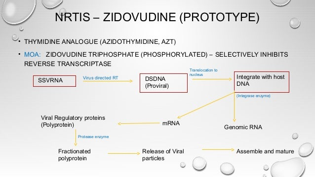 ZIDOVUDINE – CONTD. • ANOTHER MOA - ZIDOVUDINE MAY ITSELF GETS INCORPORATED IN PROVIRAL DNA AND PREVENTS CHAIN ELONGATION ...