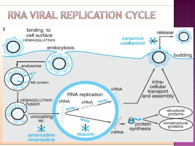 hiv life cycle and drug targets pdf