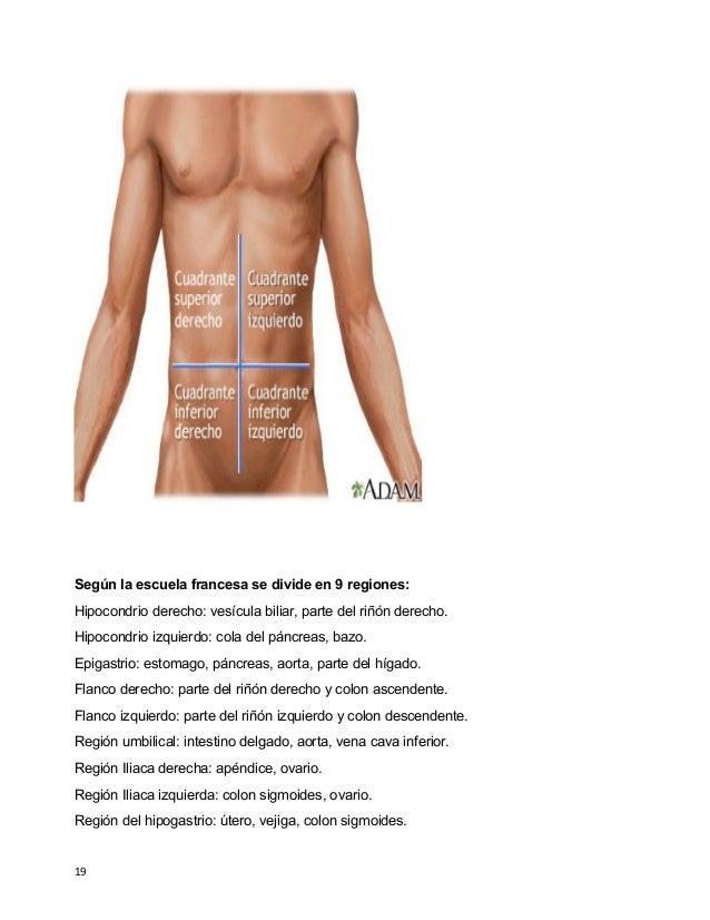 Atractivo Anatomía Cuadrante Superior Derecho Componente - Imágenes ...